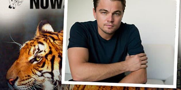 La star Leonardo DiCaprio, engagé dans la préservation de la planète et la cause animale, avait injecté un million de dollars en 2010 dans ce projet avec sa fondation.