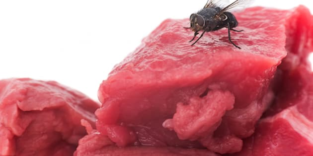 A joint study published in Scientific Reports this November found that flies are carrying more bacteria and harmful diseases than we initially thought.