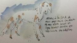 Joann Sfar dessine autre chose que des chats pour la bonne