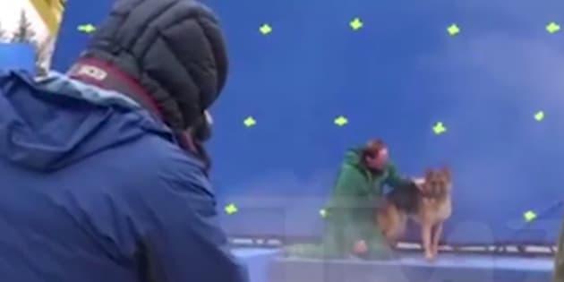 """Une vidéo du site TMZ crée la polémique autour du traitement des animaux sur le tournage du film """"Mes vies de chien""""."""