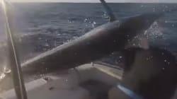 Este pescador se libra por milímetros de ser atravesado por un pez