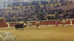 Torero 26enne incornato dal toro in Portogallo: stava combattendo l'animale a mani