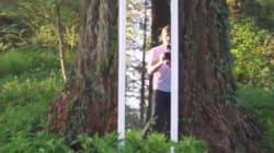 Cette balade en boucle dans les bois va vous