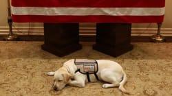 Sully, il cane di Bush, veglia la bara del suo amico: la foto fa il giro del