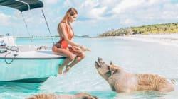 Nabilla pose avec deux cochons pendant son voyage aux
