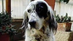 Chiede di poter assistere la sua cagnolina malata, le viene concesso il permesso