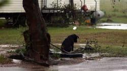 I piccoli cani legati e abbandonati alla furia dell'uragano