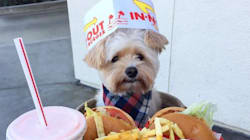 This Rescue Pup Is The Only Foodie You Need To Follow On