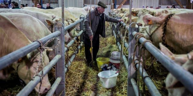 1,3 milliard de Chinois vont à nouveau pouvoir manger du bœuf français