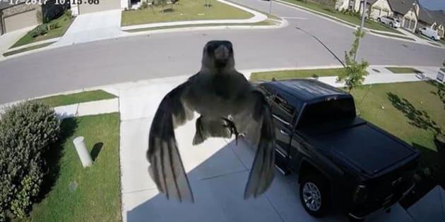 On peut voir un oiseau suspendu dans les airs, mais ce n'est pas un colibri.