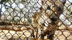 Zoológico venezolano sacrifica animales para salvar a