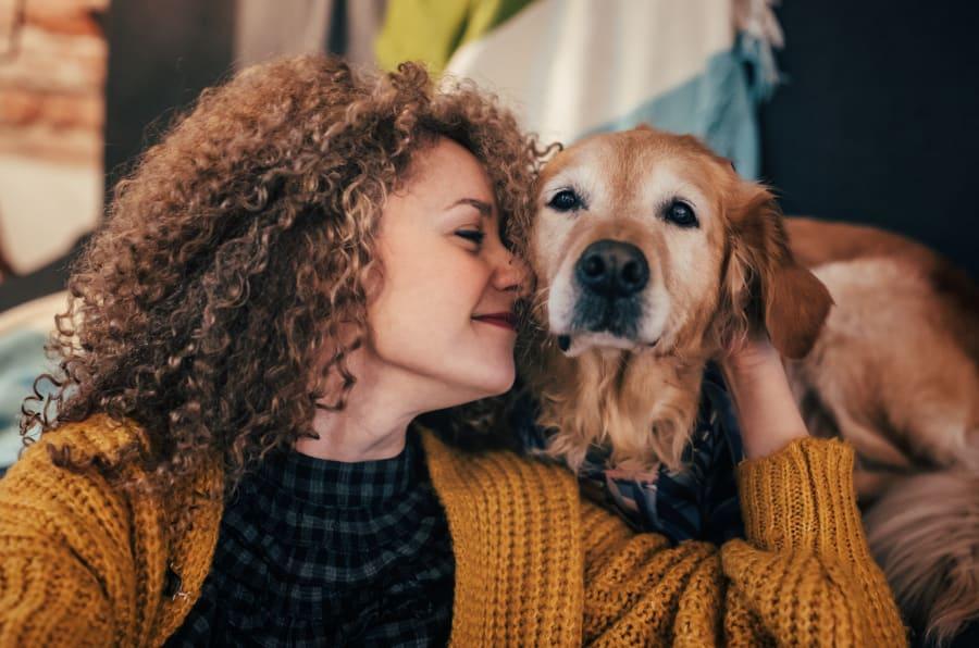 En una separación, ¿quién se queda con el perro?