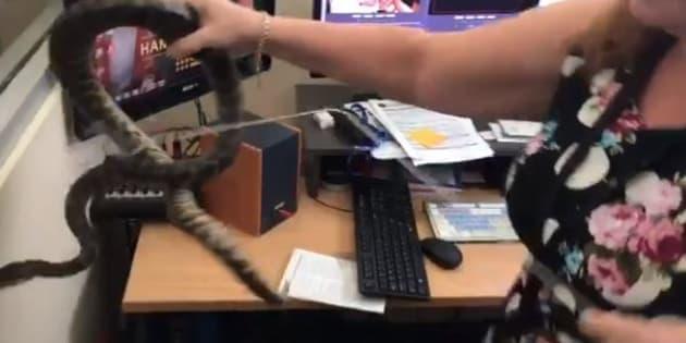 Voici la collègue dont tout le monde a besoin en cas de présence de serpent