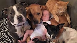 These Rescue Animals Love Their Tiny Human Brother So