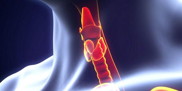 Human Thyroid Gland Illustration. 3D render