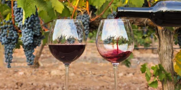 Le bordeaux version 2050 imaginé par ce viticulteur n'a pas grand chose à voir avec celui que vous buvez