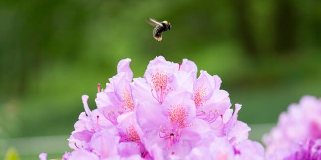Plus de 75% des insectes ont disparu en 30 ans — Allemagne