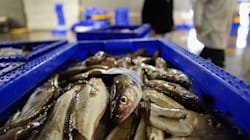 In 3 mesi l'Italia ha esaurito il pesce del 2017. E ora dipenderemo