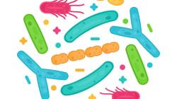バチルス属細菌は病原性黄色ブドウ球菌の定着を排除する