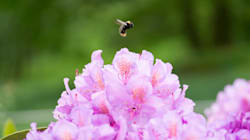 Les chiffres alarmants de cette étude sur la disparition des insectes