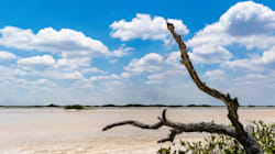 Yucatán, la tierra del venado y del faisán, ahí donde debatirán los