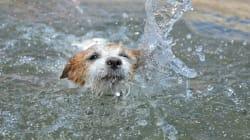 Getta cane in acqua con una grossa pietra al collo: si libera e si