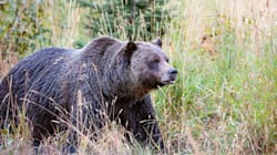 Mother And Baby Killed By Grizzly Bear Near Remote Yukon