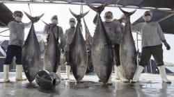 Y en la guerra del atún, México vuelve a perder ante