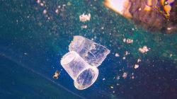 Du plastique retrouvé dans les créatures marines au plus profond des