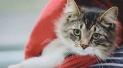 Un chat retrouvé dans un colis à 1200 km de chez lui retrouve sa