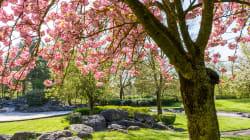 Si le printemps tombe le 20 mars (et non le 21), c'est pour