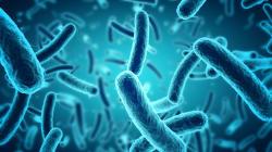 Comment les salmonelles peuvent contaminer la nourriture (et pas seulement le lait
