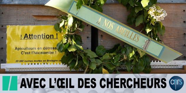 Après avoir perdu des dizaines de milliers de colonies d'abeilles, les apiculteurs se mobilisent dans toute la France