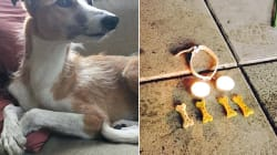 Fiori, croccantini e candele: il memoriale per Iggy, il cane morto durante l'attentato di