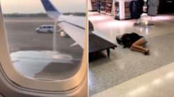 L'aereo perde carburante, sposini evitano la sciagura. Ma la compagnia non li ricompensa come avrebbe