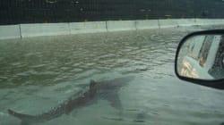 La verdadera historia de la foto falsa de un tiburón en una autopista de