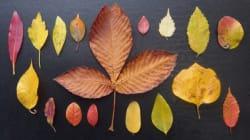 「雑草という草はない」 東京で拾った落ち葉を紹介し続ける理由が深かった