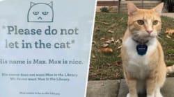 Max le chat voulait juste entrer dans une bibliothèque, il est désormais à la tête d'un vrai fan