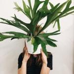 Pourquoi vos plantes meurent tout le