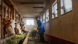 BLOG - Avec ce nouvel accord de libre échange, ce sont encore les petits éleveurs français qui vont payer la