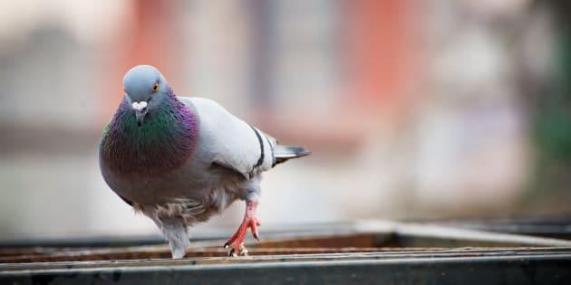 Aujourd'hui, le respect des animaux est une préoccupation majeure, à laquelle nous sommes de plus en plus attachés. Mais la manière dont nous parlons des autres espèces reflète-t-elle cette évolution?
