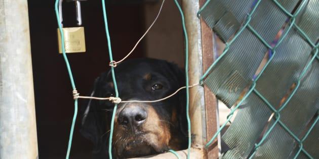Aunque existen leyes sobre maltrato animal en todos los estados del país, no están homogeneizadas