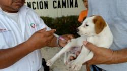 ¿Qué empresario está detrás de las vacunas antirrábicas para perros y