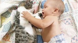35 Precious Photos Of Cats And Babies Just