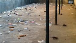 Rats, violence, surpopulation, le traitement