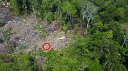 In volo col drone sulla tribù di indigeni. Lo straordinario video registrato nella Foresta