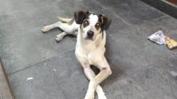 Polémique au Brésil après la mort d'un chien tué par le vigile d'un