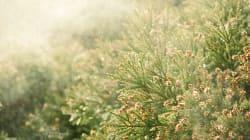 2019年の花粉、なんと前年の3倍近く飛散するかも!皆さま、お覚悟を…