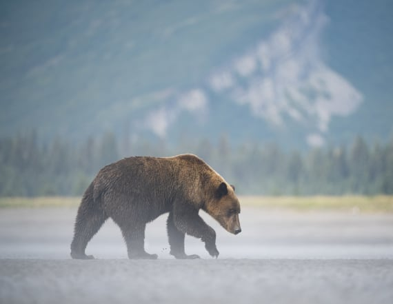 Hunter killed in park's 1st deadly grizzly attack
