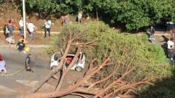 Cade albero sulla via Cassia a Roma: due feriti, uno in codice